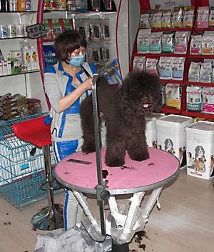 Собачья парикмахерская в Харбине